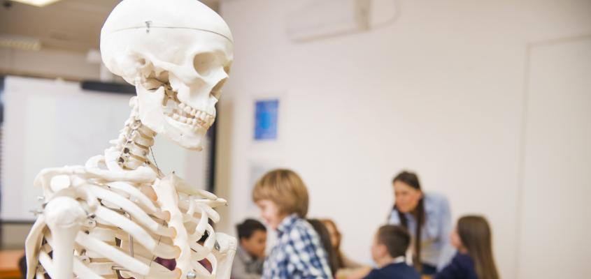 A skeleton in the fore ground, students in the back ground.